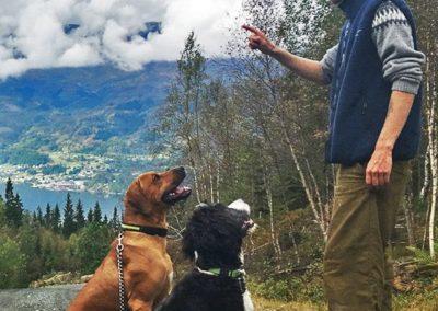 En instruktør som lærer hundene å sitte på vent