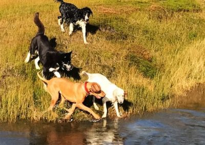 4 hunder som koser seg ved vannet