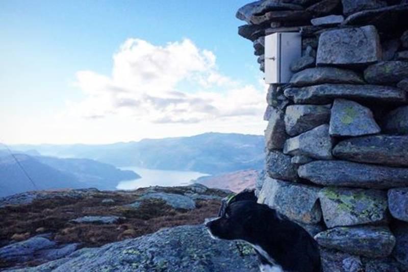 En hund under en steinrøys og flott utsikt fra Nevroldsnuten
